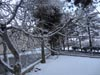 Previous picture :: Wallpaper - Quetta Snowfall January 2012 (4) - 4608 x 3456