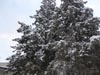 Next picture :: Wallpaper - Quetta Snowfall January 2012 (6) - 4608 x 3456